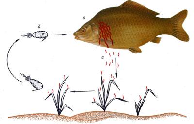 (ФОТО) Нажмите, для просмотра.  Болезни и враги рыб.